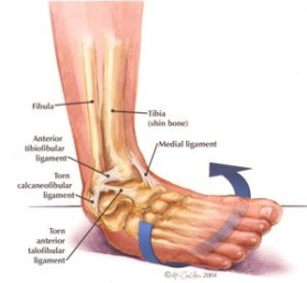 Dynamic Ankle Stability