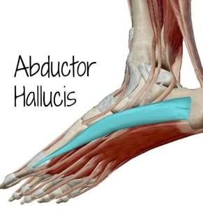 Abductor-hallucis-e1380568713548